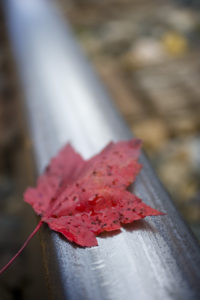 IMAGE OF ONE RAIL TRACK WITH A RED MAPLE LEAF ON IT. FALL PICTURE